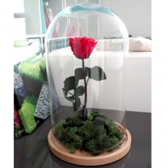 "Rosa Roja ""La Bella y la Bestia"""